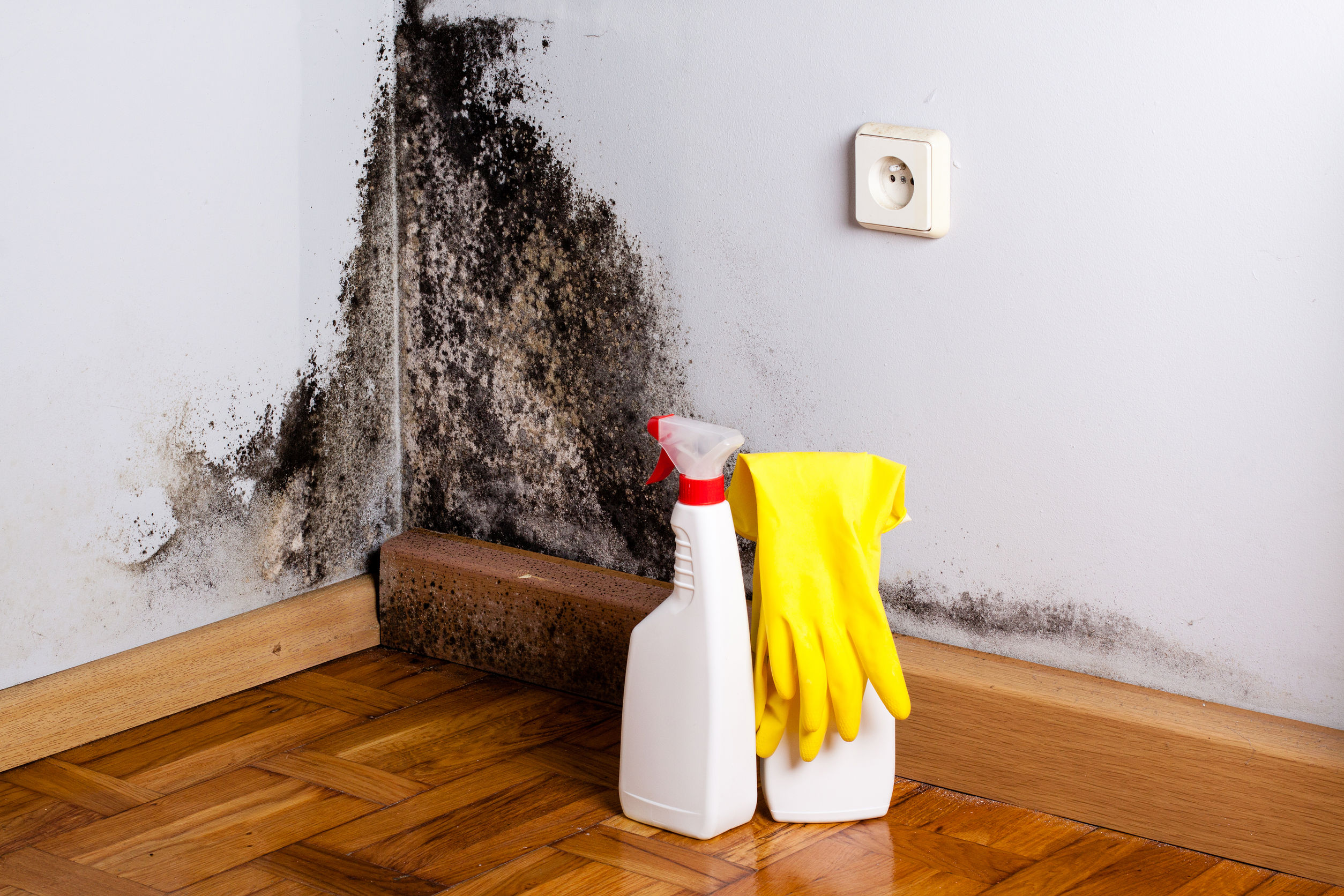 Keeping Your Wood Floors Clean Mold